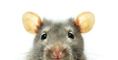Como salir de la carrera de la rata