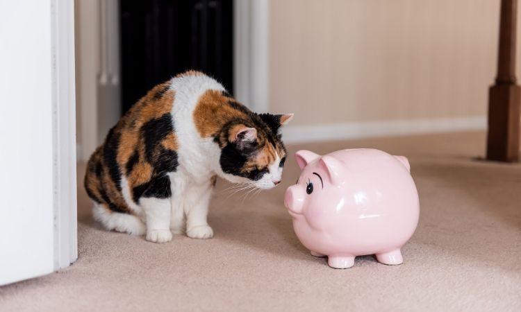 Finanzas personales como salir de deudas